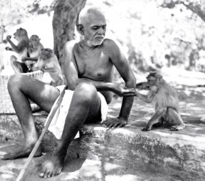 Ramana Maharshi is shown feeding monkeys.