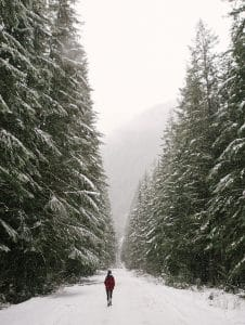 A woman is shown walking, unplugging in nature, on a snow covered trail surrounded by massive pine trees.